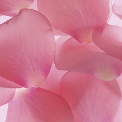 Rosa Japonesa - Sabonete Cremoso