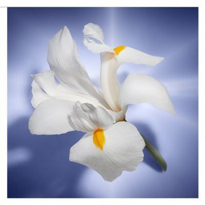 Imagem 5 do produto La Vie Est Belle Lancôme - Perfume Feminino - Eau de Parfum - 75ml